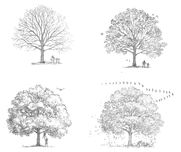 Getting to Know Trees from The Green Hour
