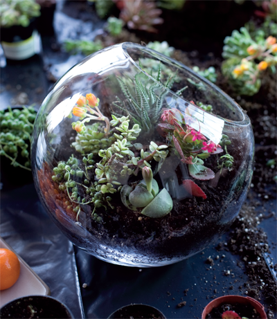 Terrarium from Side by Side