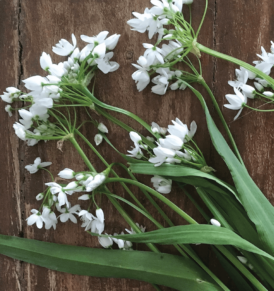 Learn to forage with videos from Leda Meredith, author of The Skillful Forager